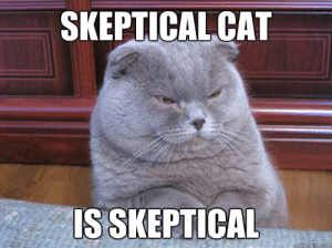 Cat is skeptical SEO can be easy
